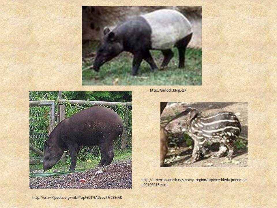 http://amook.blog.cz/ http://brnensky.denik.cz/zpravy_region/tapirice-hleda-jmeno-od- b20100815.html http://cs.wikipedia.org/wiki/Tap%C3%ADrovit%C3%AD