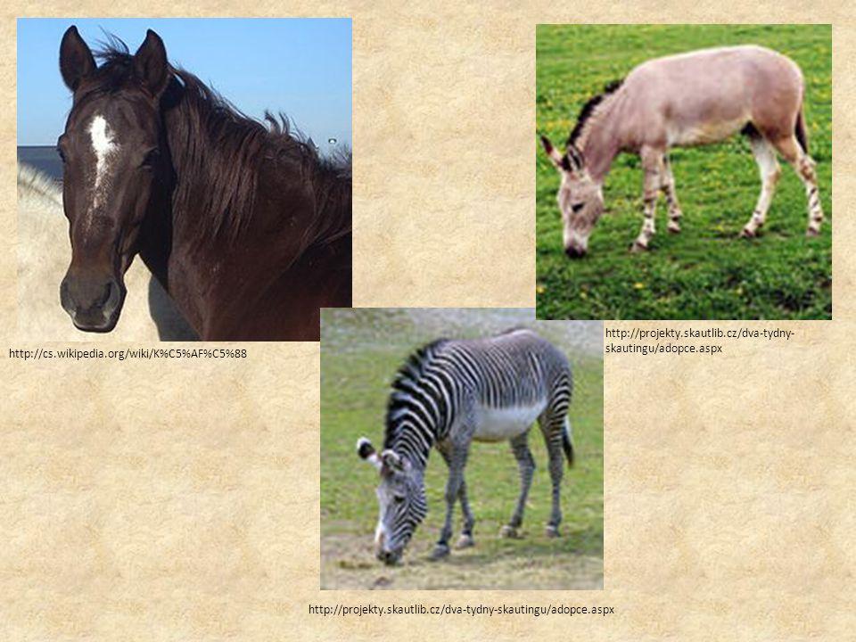 Chov koní v našem městě Chov založen v roce 1965 Polokrevníci a plnokrevníci http://www.pulec.cz/hrebcin /