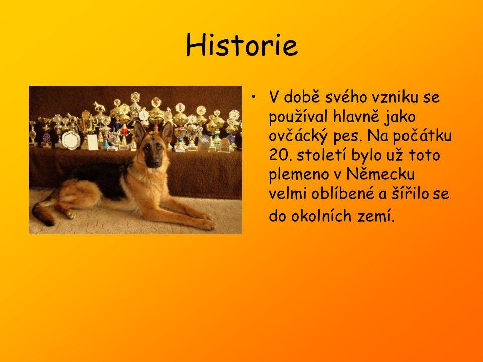 Historie V době svého vzniku se používal hlavně jako ovčácký pes. Na počátku 20. století bylo už toto plemeno v Německu velmi oblíbené a šířilo se do