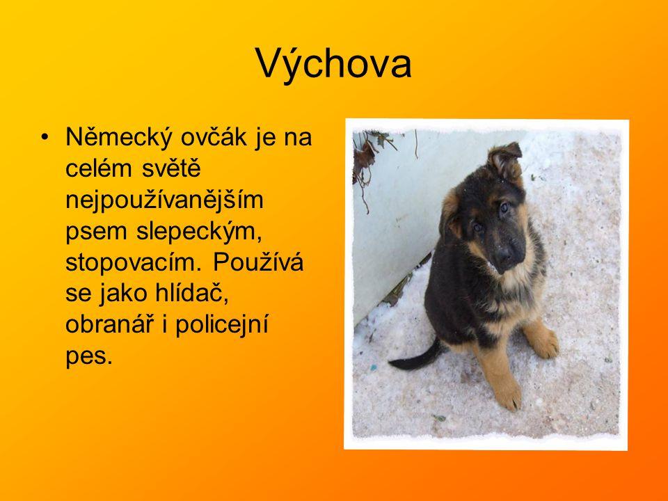 Výchova Německý ovčák je na celém světě nejpoužívanějším psem slepeckým, stopovacím. Používá se jako hlídač, obranář i policejní pes.