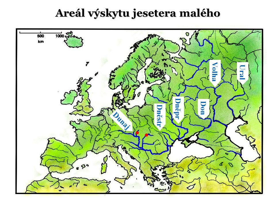 Dunaj Ural Volha Don Dněstr Areál výskytu jesetera malého Dněpr