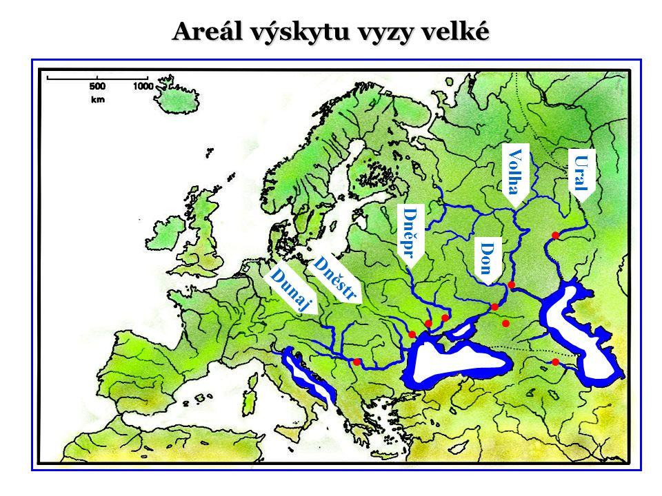 Dunaj Ural Volha Don Dněstr Areál výskytu vyzy velké Dněpr
