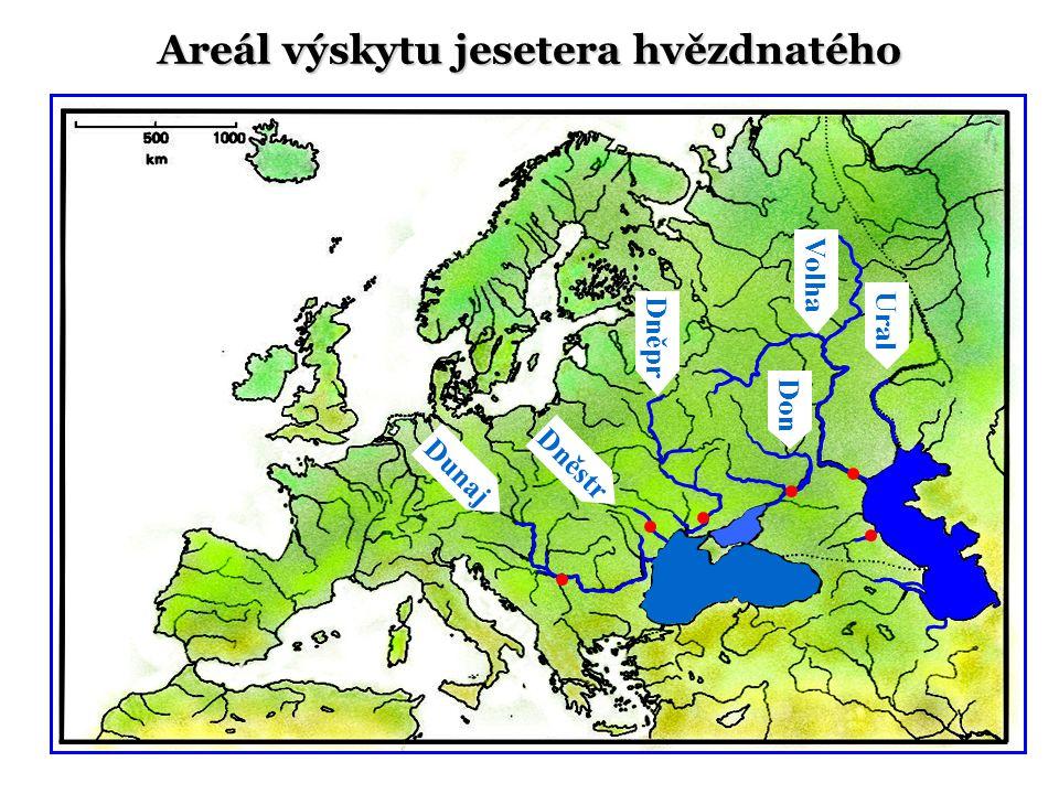 Dunaj Ural Volha Don Dněstr Dněpr Areál výskytu jesetera hvězdnatého
