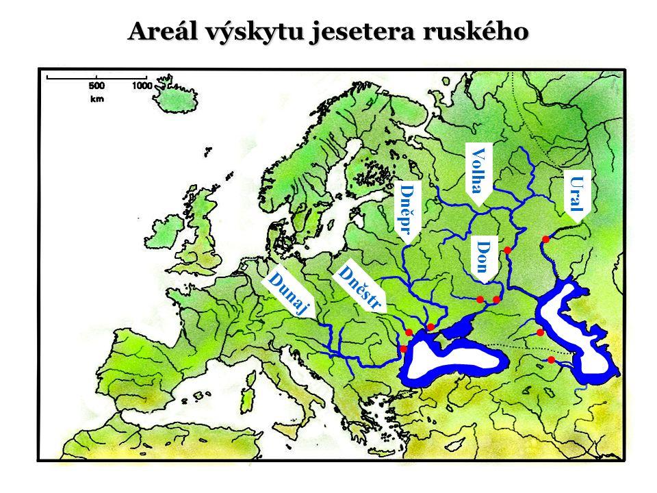 Dunaj Ural Volha Don Dněstr Dněpr Areál výskytu jesetera ruského