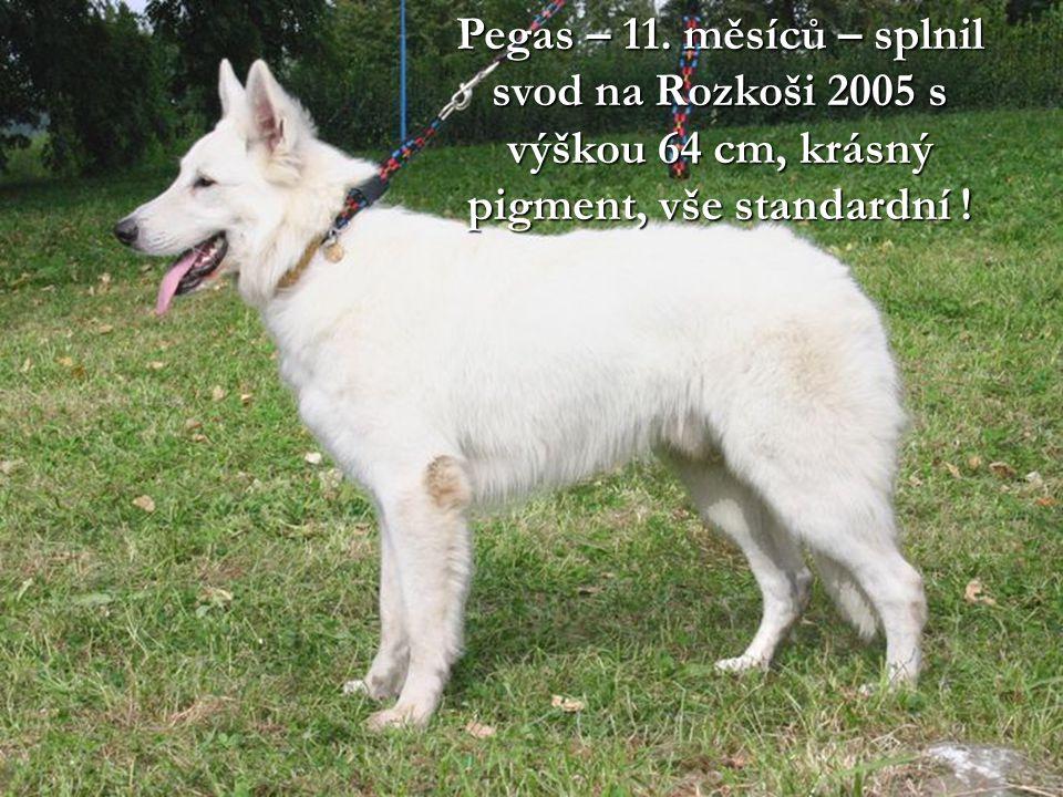 Pegas – 11. měsíců – splnil svod na Rozkoši 2005 s výškou 64 cm, krásný pigment, vše standardní !