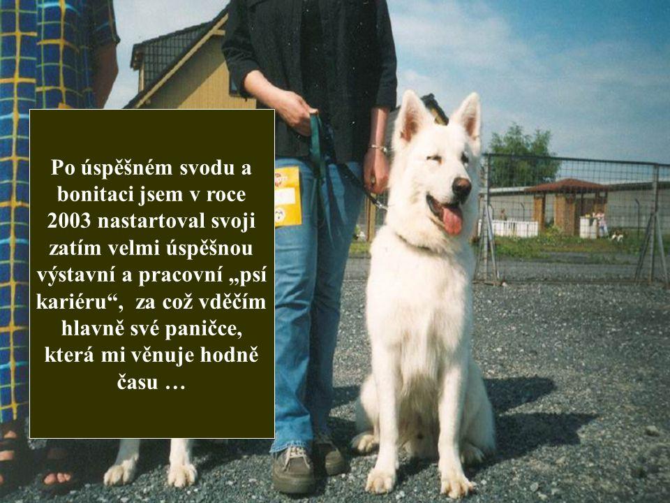 """Po úspěšném svodu a bonitaci jsem v roce 2003 nastartoval svoji zatím velmi úspěšnou výstavní a pracovní """"psí kariéru , za což vděčím hlavně své paničce, která mi věnuje hodně času …"""