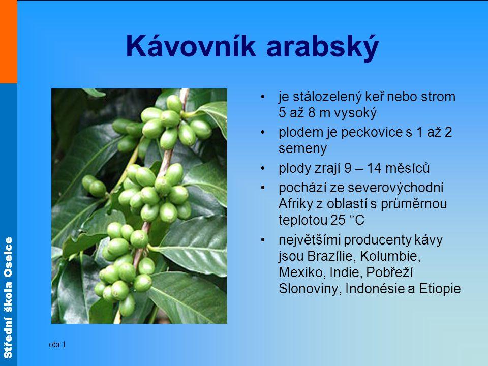 Střední škola Oselce Kávovník arabský je stálozelený keř nebo strom 5 až 8 m vysoký plodem je peckovice s 1 až 2 semeny plody zrají 9 – 14 měsíců poch