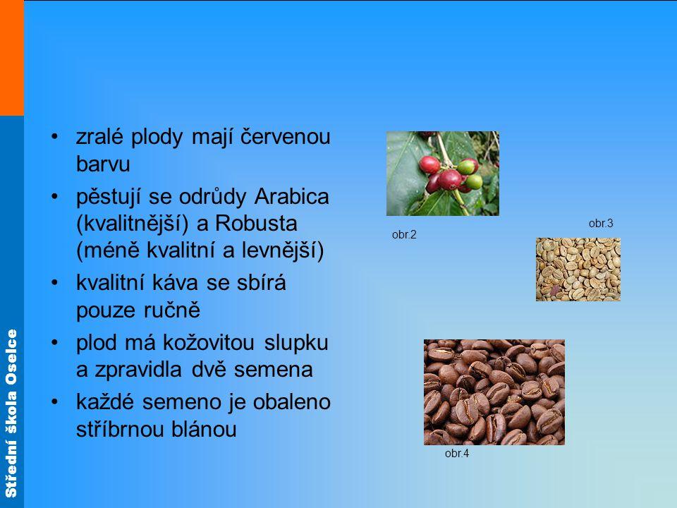 Střední škola Oselce zralé plody mají červenou barvu pěstují se odrůdy Arabica (kvalitnější) a Robusta (méně kvalitní a levnější) kvalitní káva se sbí