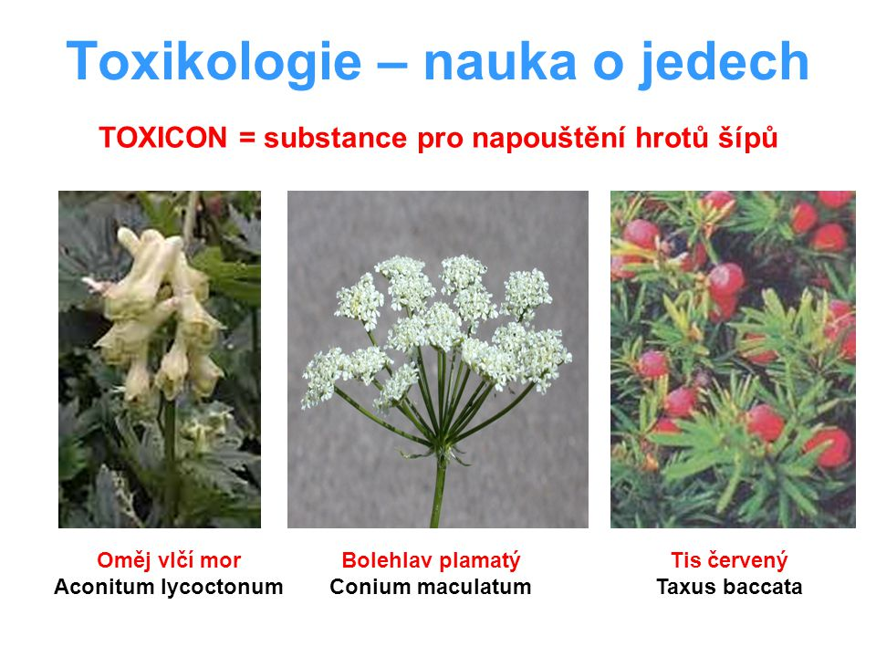 Toxikologie – nauka o jedech Oměj vlčí mor Aconitum lycoctonum Bolehlav plamatý Conium maculatum Tis červený Taxus baccata TOXICON = substance pro nap