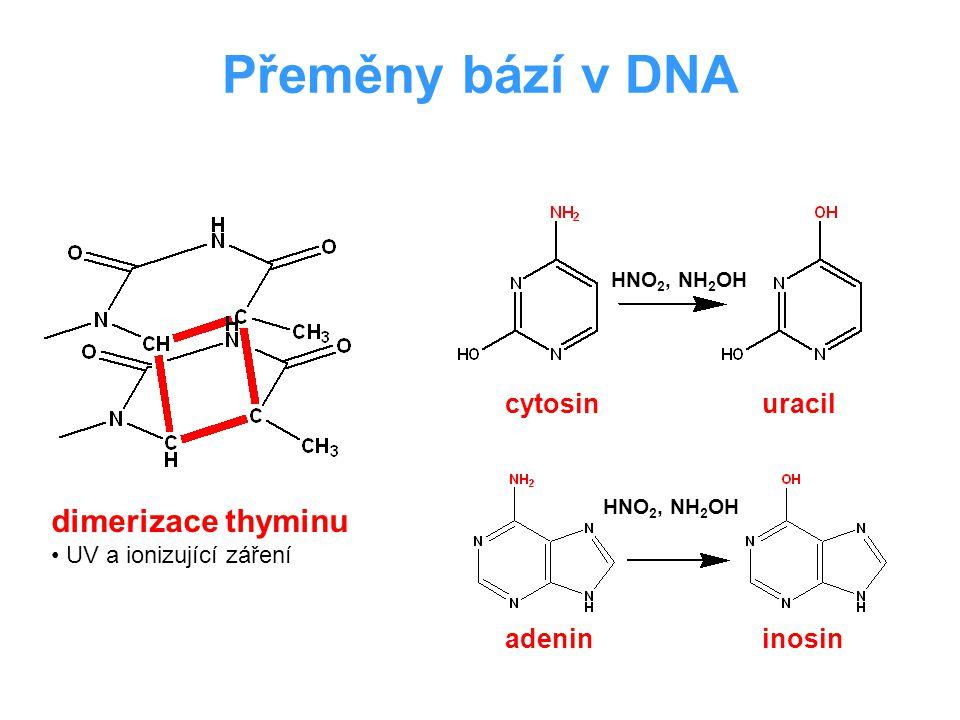 Přeměny bází v DNA dimerizace thyminu UV a ionizující záření adenininosin cytosinuracil HNO 2, NH 2 OH