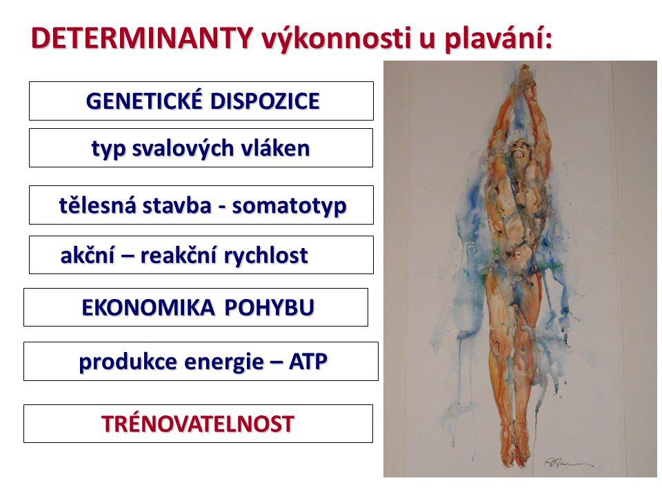 DETERMINANTY výkonnosti u plavání: GENETICKÉ DISPOZICE GENETICKÉ DISPOZICE TRÉNOVATELNOST typ svalových vláken akční – reakční rychlost akční – reakční rychlost tělesná stavba - somatotyp tělesná stavba - somatotyp EKONOMIKA POHYBU EKONOMIKA POHYBU produkce energie – ATP produkce energie – ATP