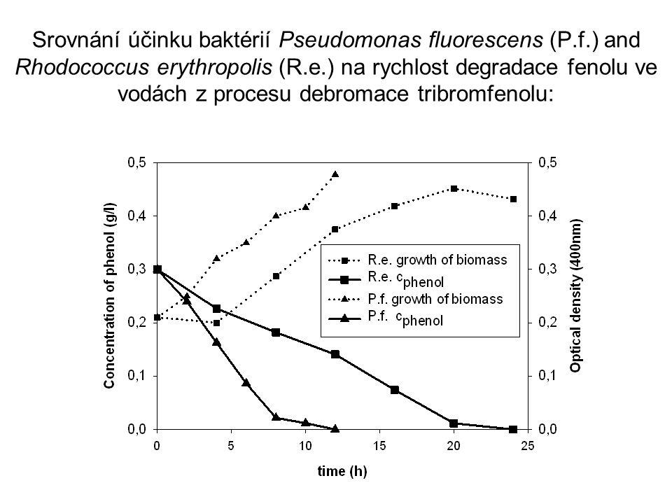Srovnání účinku baktérií Pseudomonas fluorescens (P.f.) and Rhodococcus erythropolis (R.e.) na rychlost degradace fenolu ve vodách z procesu debromace