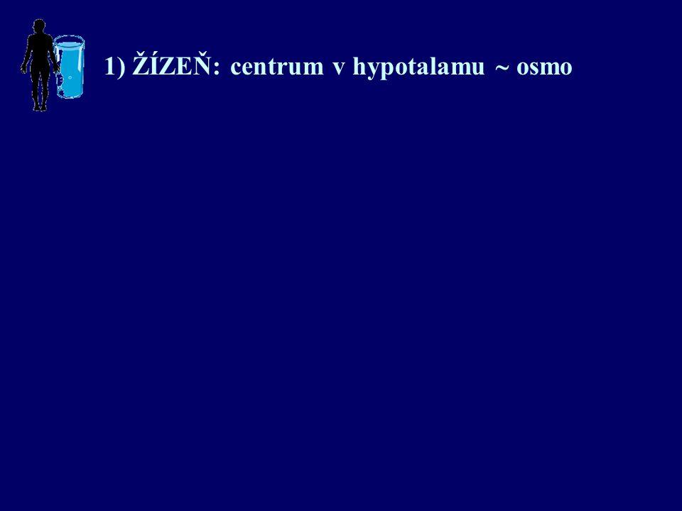 1) ŽÍZEŇ: centrum v hypotalamu  osmo