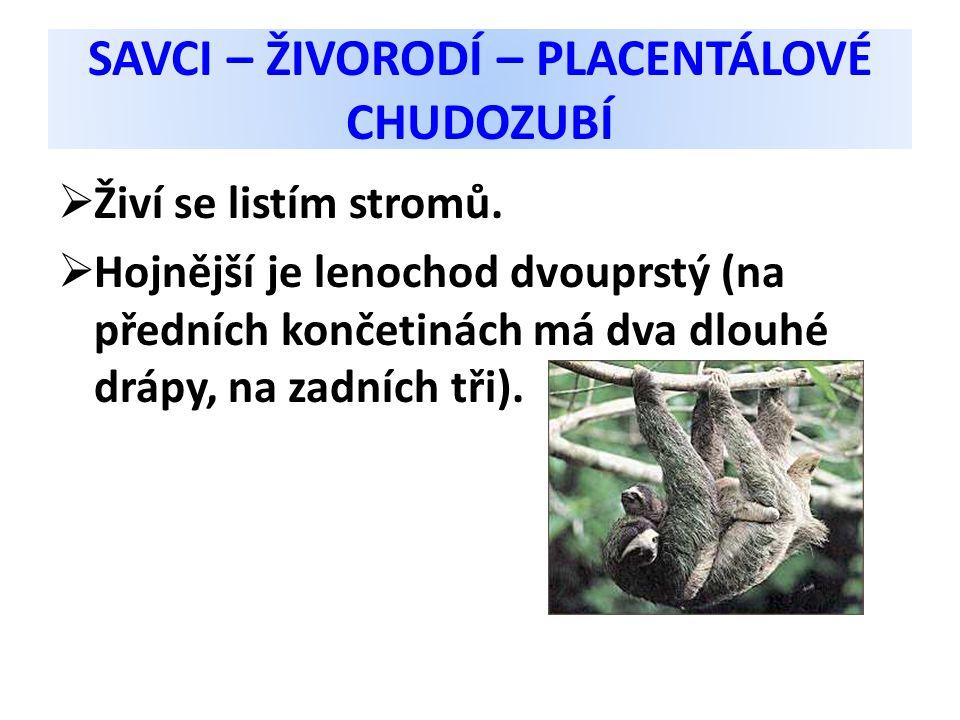 SAVCI – ŽIVORODÍ – PLACENTÁLOVÉ CHUDOZUBÍ  Živí se listím stromů.  Hojnější je lenochod dvouprstý (na předních končetinách má dva dlouhé drápy, na z