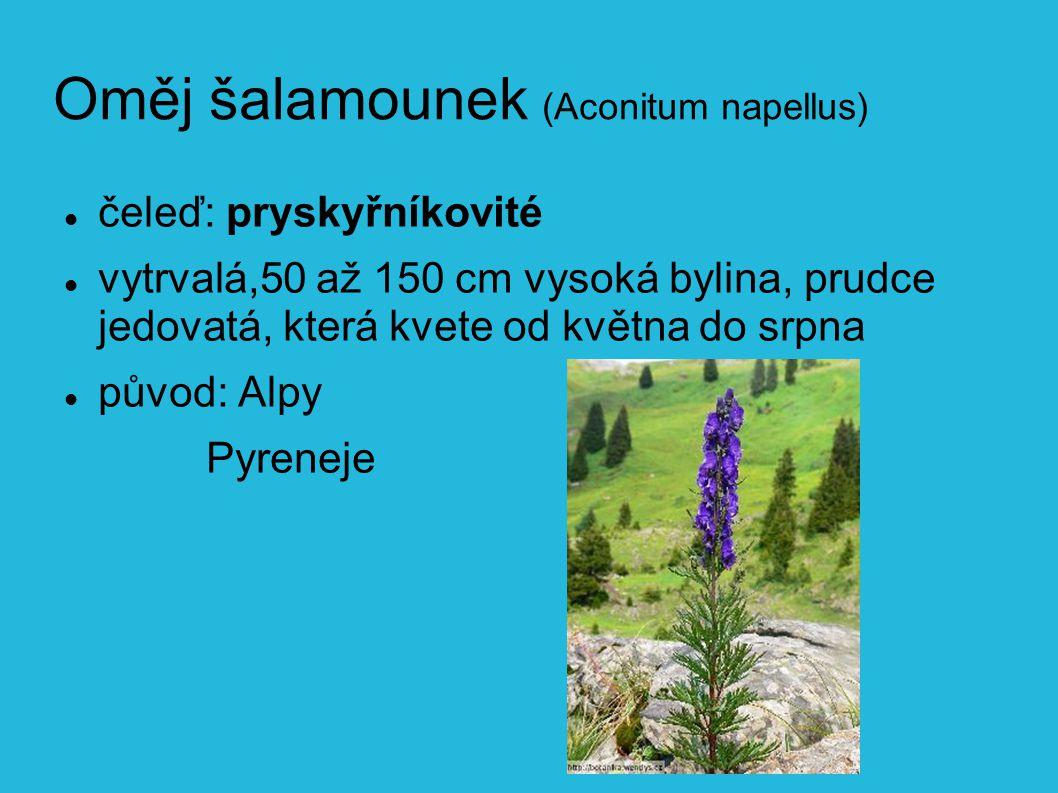 Oměj šalamounek (Aconitum napellus) čeleď: pryskyřníkovité vytrvalá,50 až 150 cm vysoká bylina, prudce jedovatá, která kvete od května do srpna původ: Alpy Pyreneje