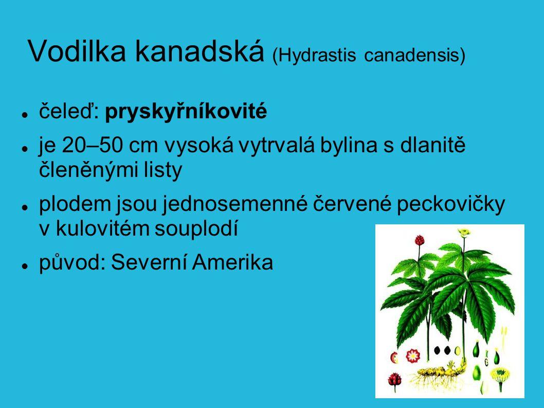 Vodilka kanadská (Hydrastis canadensis) čeleď: pryskyřníkovité je 20–50 cm vysoká vytrvalá bylina s dlanitě členěnými listy plodem jsou jednosemenné červené peckovičky v kulovitém souplodí původ: Severní Amerika