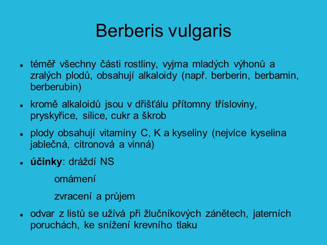 Berberis vulgaris téměř všechny části rostliny, vyjma mladých výhonů a zralých plodů, obsahují alkaloidy (např.