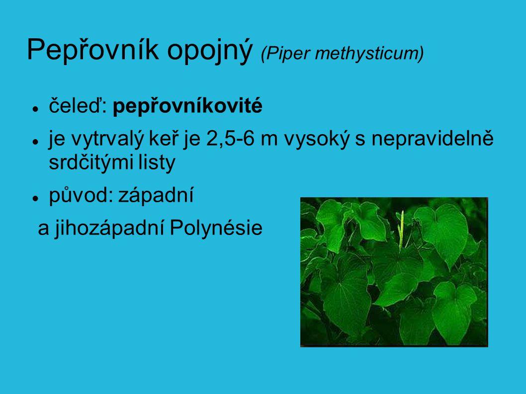 Pepřovník opojný (Piper methysticum) čeleď: pepřovníkovité je vytrvalý keř je 2,5-6 m vysoký s nepravidelně srdčitými listy původ: západní a jihozápadní Polynésie