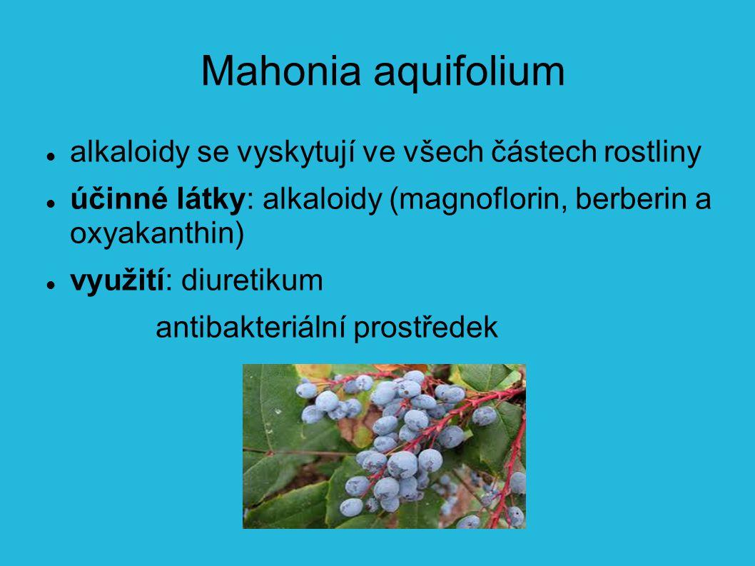 Mahonia aquifolium alkaloidy se vyskytují ve všech částech rostliny účinné látky: alkaloidy (magnoflorin, berberin a oxyakanthin) využití: diuretikum antibakteriální prostředek