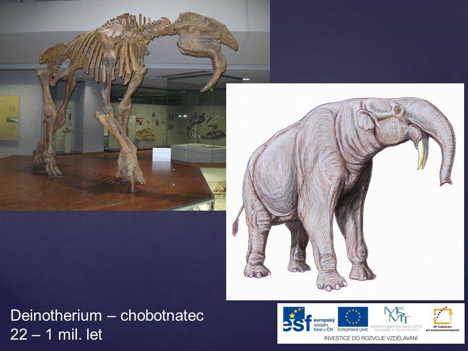 Deinotherium – chobotnatec 22 – 1 mil. let