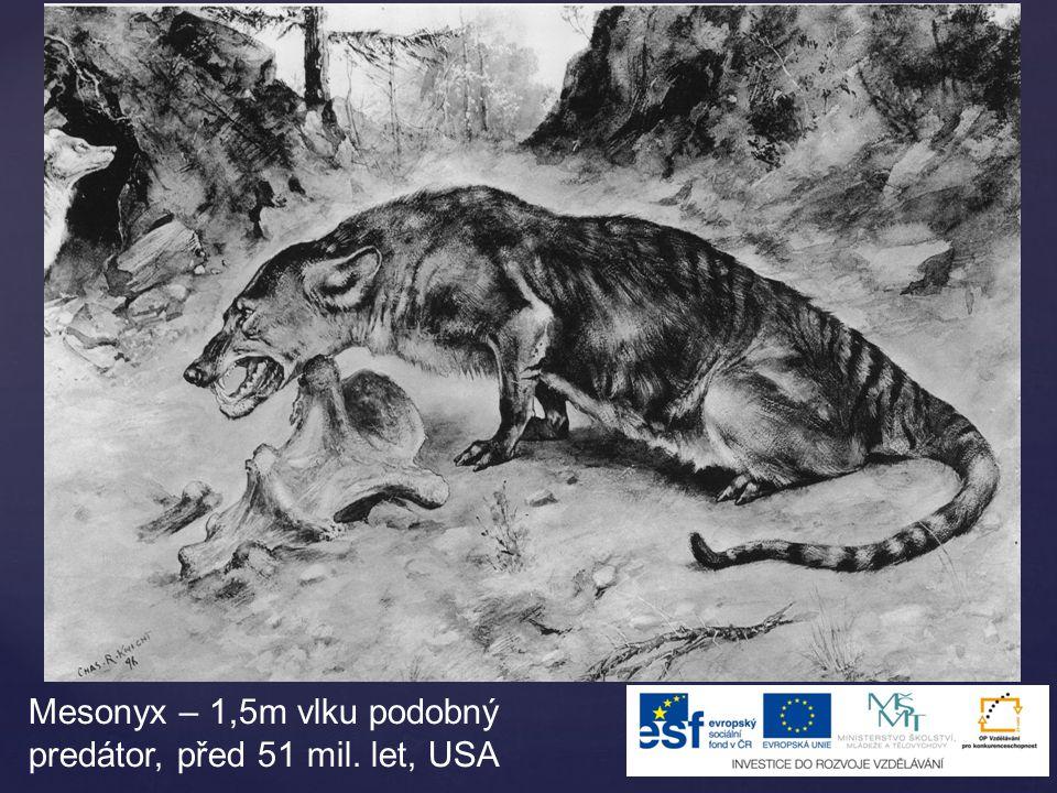 Mesonyx – 1,5m vlku podobný predátor, před 51 mil. let, USA