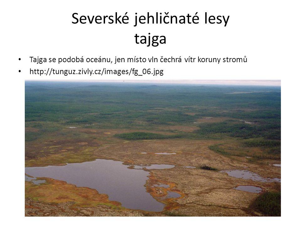 Severské jehličnaté lesy tajga Tajga se podobá oceánu, jen místo vln čechrá vítr koruny stromů http://tunguz.zivly.cz/images/fg_06.jpg