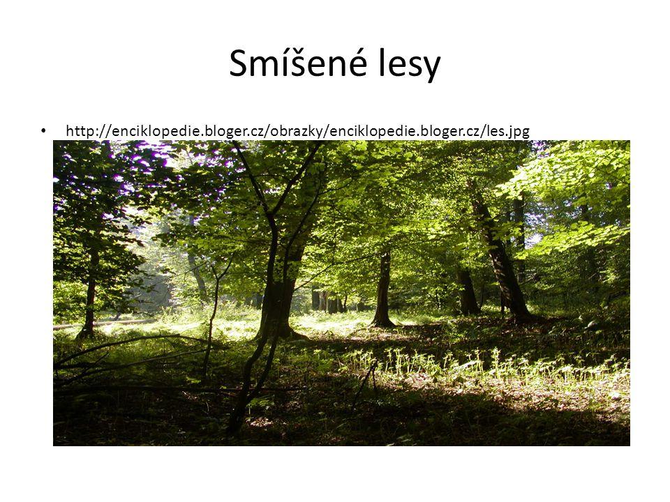 Smíšené lesy Borovice, modřín, smrk, dub, buk, bříza Jelen, srna, zajíc, jezevec, prase divoké, veverky,………………… Těžba dřeva Vypište 5 států, ve kterých jsou tyto lesy nejvíce rozšířeny.
