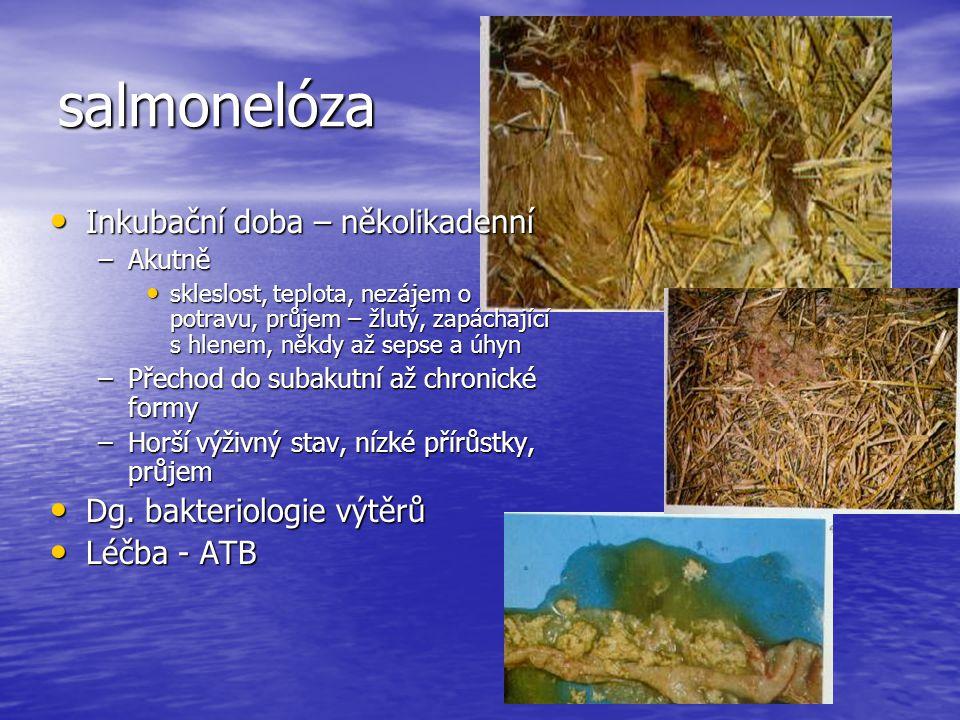 salmonelóza Inkubační doba – několikadenní Inkubační doba – několikadenní –Akutně skleslost, teplota, nezájem o potravu, průjem – žlutý, zapáchající s