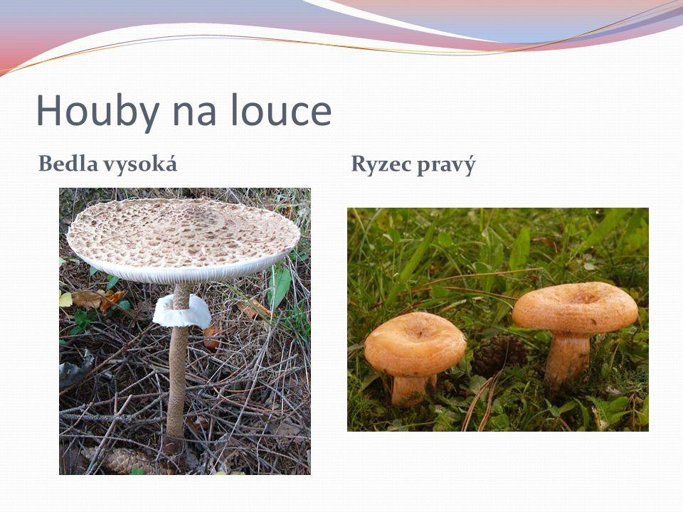 Kvíz 1.Výjmenuj jak houby rozdělujeme,a z každé skupiny řekni jednu houbu.
