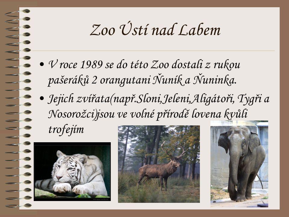 Zoo Ústí nad Labem V roce 1989 se do této Zoo dostali z rukou pašeráků 2 orangutani Ňuník a Ňuninka. Jejich zvířata(např.Sloni,Jeleni,Aligátoři, Tygři