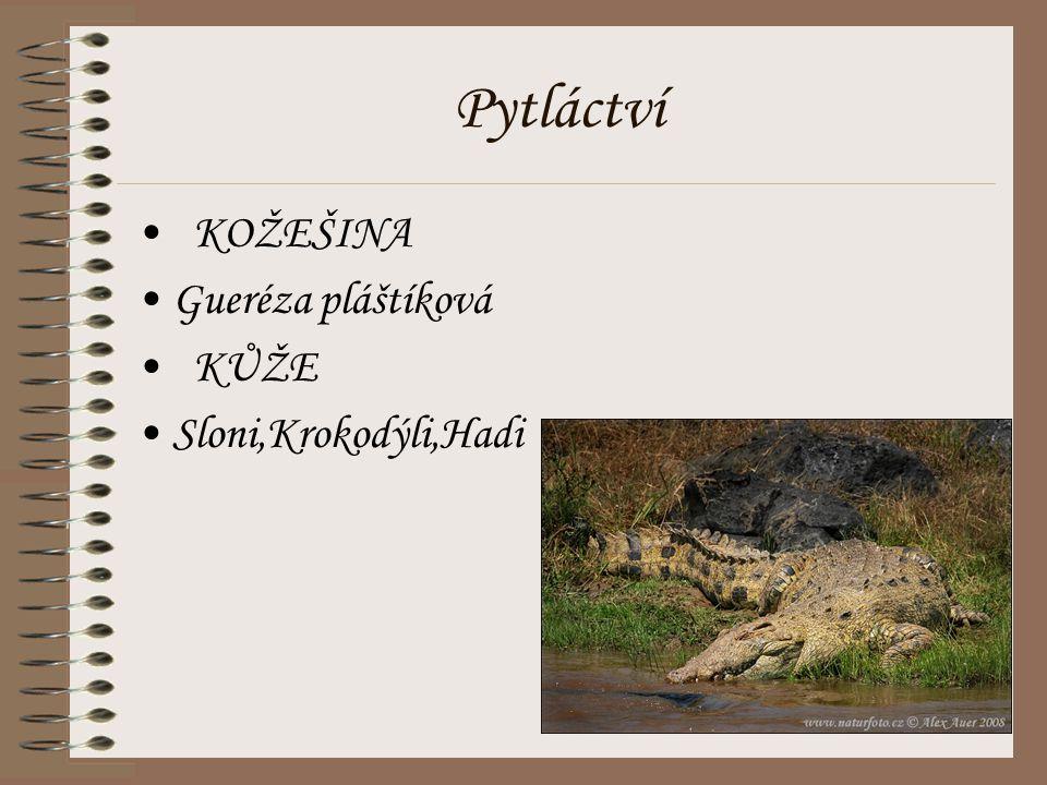 Pytláctví KOŽEŠINA Gueréza pláštíková KŮŽE Sloni,Krokodýli,Hadi