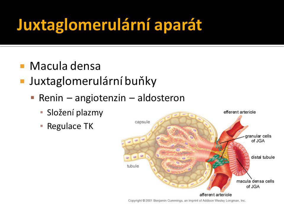  Macula densa  Juxtaglomerulární buňky  Renin – angiotenzin – aldosteron ▪ Složení plazmy ▪ Regulace TK