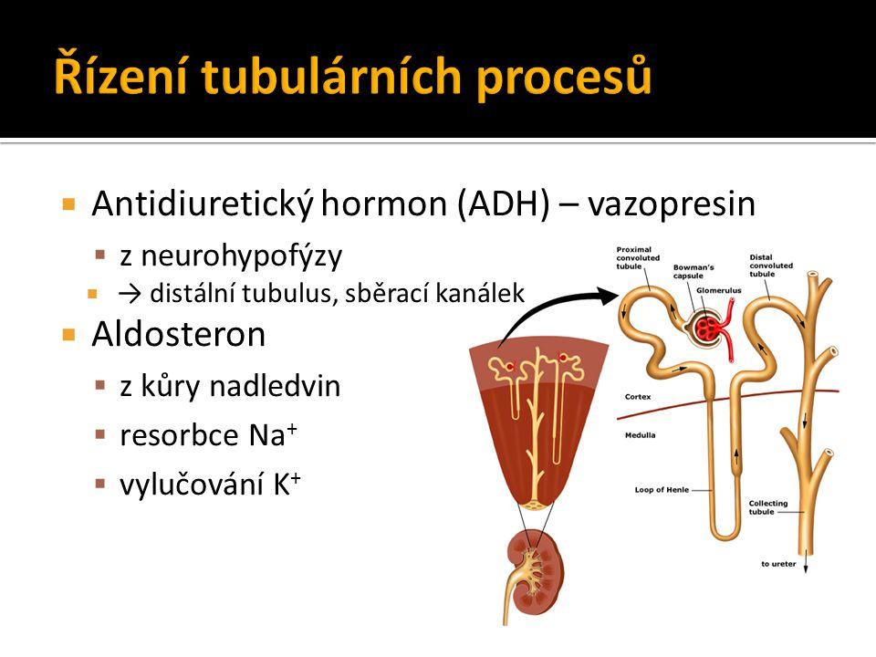  Antidiuretický hormon (ADH) – vazopresin  z neurohypofýzy  → distální tubulus, sběrací kanálek  Aldosteron  z kůry nadledvin  resorbce Na +  v