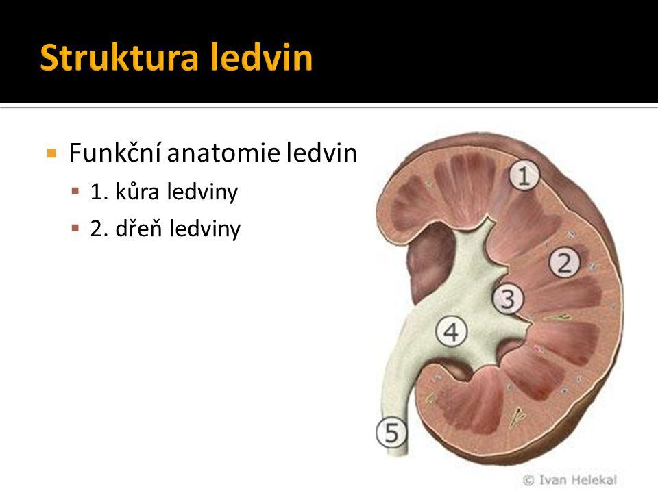  Antidiuretický hormon (ADH) – vazopresin  z neurohypofýzy  → distální tubulus, sběrací kanálek