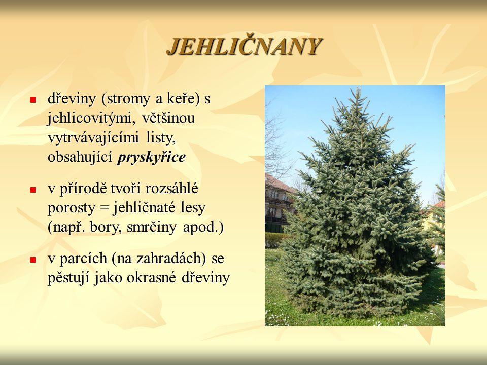 JEHLIČNANY dřeviny (stromy a keře) s jehlicovitými, většinou vytrvávajícími listy, obsahující pryskyřice dřeviny (stromy a keře) s jehlicovitými, většinou vytrvávajícími listy, obsahující pryskyřice v přírodě tvoří rozsáhlé porosty = jehličnaté lesy (např.