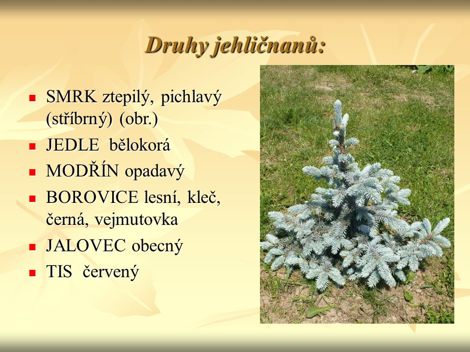 Druhy jehličnanů: SMRK ztepilý, pichlavý (stříbrný) (obr.) SMRK ztepilý, pichlavý (stříbrný) (obr.) JEDLE bělokorá JEDLE bělokorá MODŘÍN opadavý MODŘÍN opadavý BOROVICE lesní, kleč, černá, vejmutovka BOROVICE lesní, kleč, černá, vejmutovka JALOVEC obecný JALOVEC obecný TIS červený TIS červený