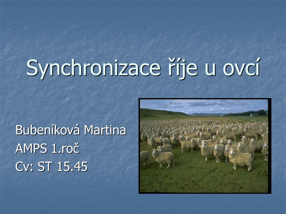 Synchronizace říje u ovcí Bubeníková Martina AMPS 1.roč Cv: ST 15.45