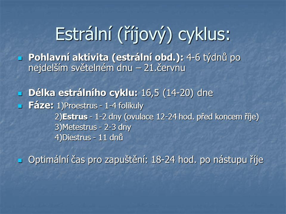 Estrální (říjový) cyklus: Pohlavní aktivita (estrální obd.): 4-6 týdnů po nejdelším světelném dnu – 21.červnu Pohlavní aktivita (estrální obd.): 4-6 týdnů po nejdelším světelném dnu – 21.červnu Délka estrálního cyklu: 16,5 (14-20) dne Délka estrálního cyklu: 16,5 (14-20) dne Fáze: 1)Proestrus - 1-4 folikuly Fáze: 1)Proestrus - 1-4 folikuly 2)Estrus - 1-2 dny (ovulace 12-24 hod.