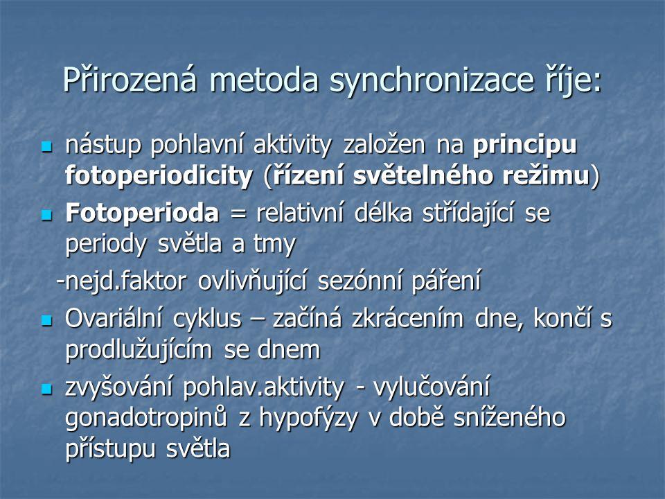 Přirozená metoda synchronizace říje: nástup pohlavní aktivity založen na principu fotoperiodicity (řízení světelného režimu) nástup pohlavní aktivity