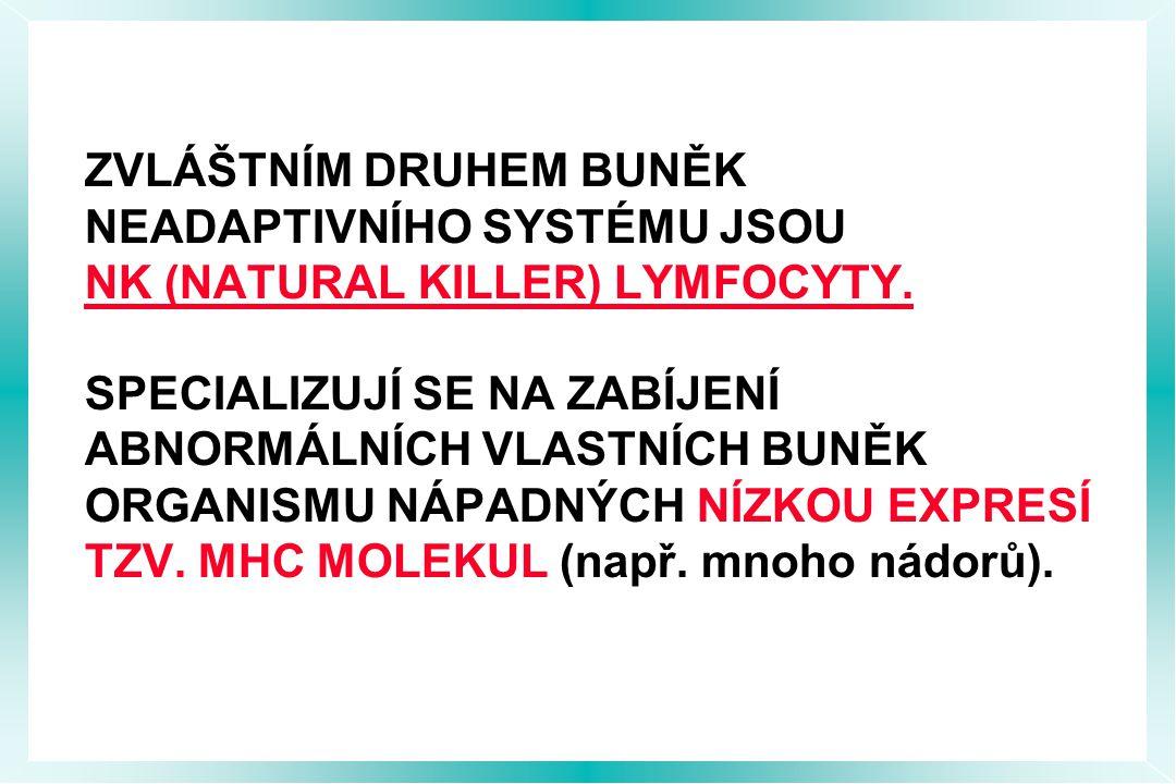 ZVLÁŠTNÍM DRUHEM BUNĚK NEADAPTIVNÍHO SYSTÉMU JSOU NK (NATURAL KILLER) LYMFOCYTY.