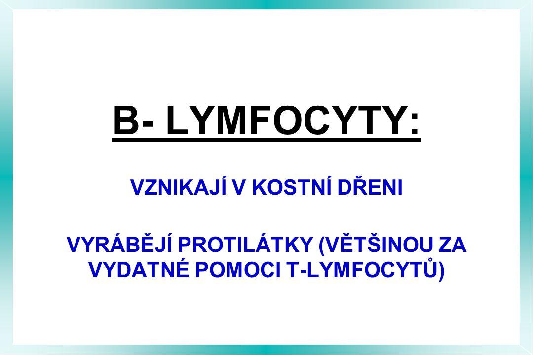 B- LYMFOCYTY: VZNIKAJÍ V KOSTNÍ DŘENI VYRÁBĚJÍ PROTILÁTKY (VĚTŠINOU ZA VYDATNÉ POMOCI T-LYMFOCYTŮ)