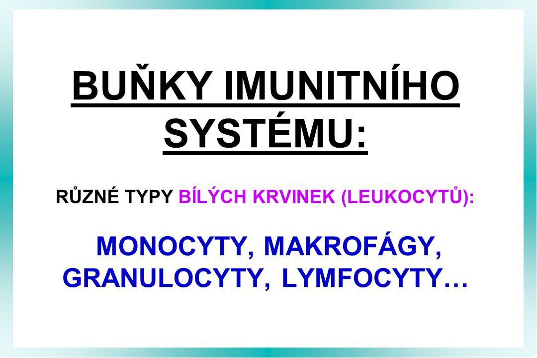BUŇKY IMUNITNÍHO SYSTÉMU: RŮZNÉ TYPY BÍLÝCH KRVINEK (LEUKOCYTŮ): MONOCYTY, MAKROFÁGY, GRANULOCYTY, LYMFOCYTY…