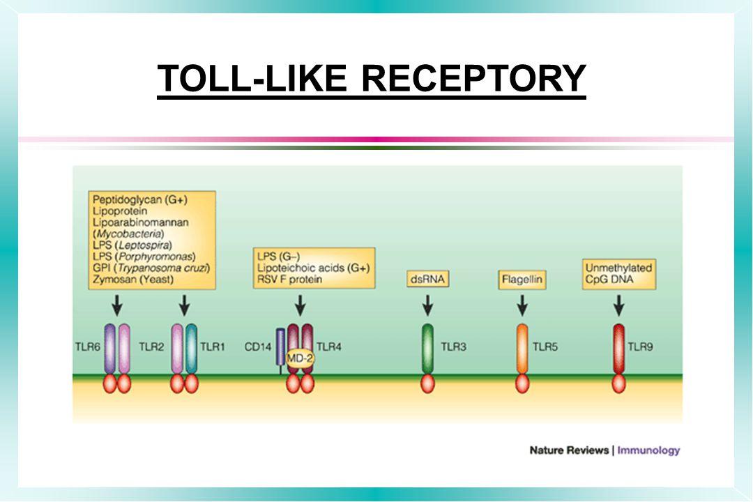 TOLL-LIKE RECEPTORY