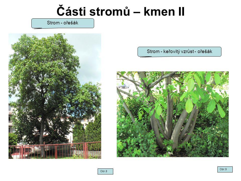 Části stromů – kmen II Strom - ořešák Strom - keřovitý vzrůst - ořešák Obr.8 Obr.9