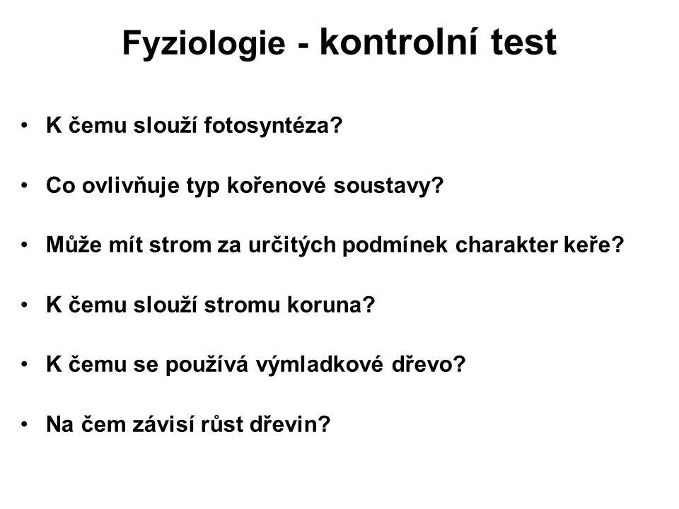 Fyziologie - kontrolní test K čemu slouží fotosyntéza? Co ovlivňuje typ kořenové soustavy? Může mít strom za určitých podmínek charakter keře? K čemu