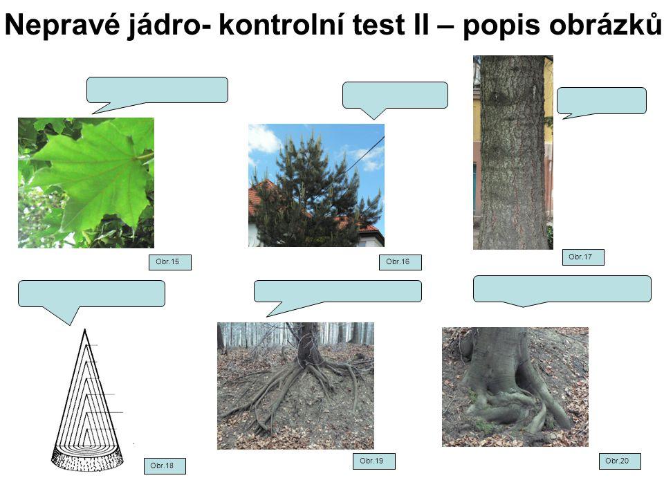 Nepravé jádro- kontrolní test II – popis obrázků Obr.15Obr.16 Obr.17 Obr.18 Obr.19Obr.20