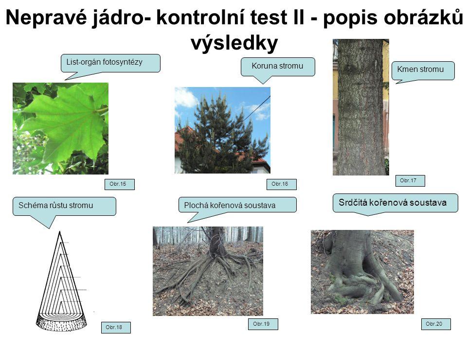 Nepravé jádro- kontrolní test II - popis obrázků výsledky List-orgán fotosyntézy Koruna stromu Kmen stromu Schéma růstu stromu Srdčitá kořenová sousta