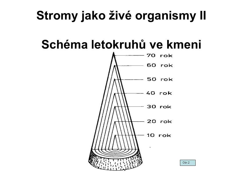 Stromy jako živé organismy II Schéma letokruhů ve kmeni Obr.2