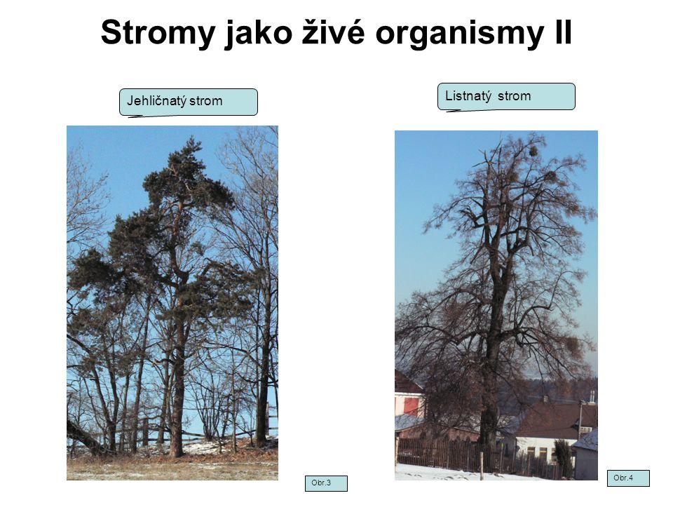 Stromy jako živé organismy II Jehličnatý strom Listnatý strom Obr.3 Obr.4