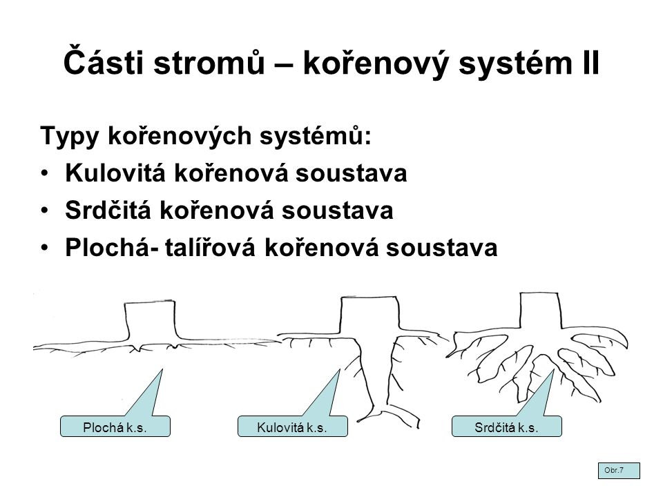 Části stromů – kořenový systém II Typy kořenových systémů: Kulovitá kořenová soustava Srdčitá kořenová soustava Plochá- talířová kořenová soustava Obr